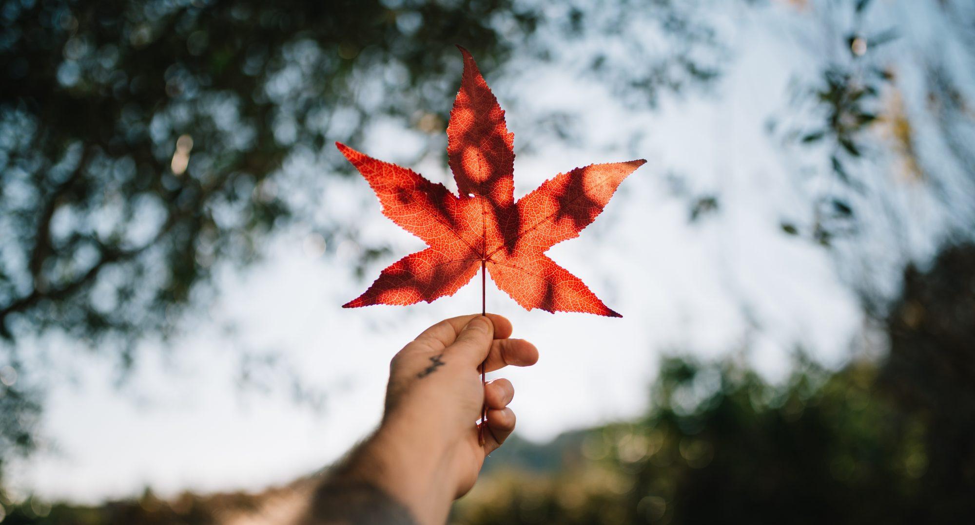 Enkel herfstblad, najaarscursus, houd jezelf gezond.